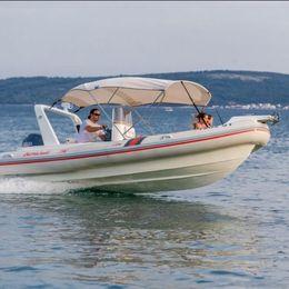 Barracuda 590 | Barracuda